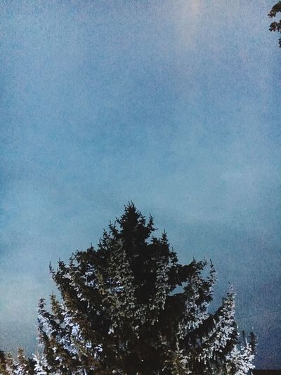 Moody Blues Moody Twilight Tree Plant Sky Beauty In Nature Scenics - Nature Nature Low Angle View Silhouette Treetop