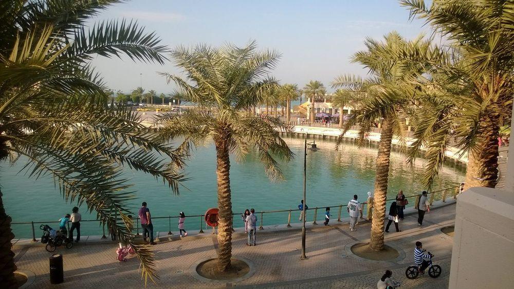 Day Marina Mall Kuwait Outdoors Palm Tree Real People Water
