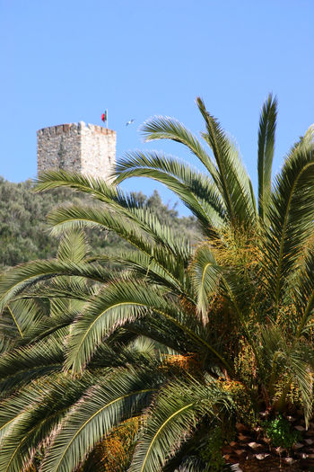 Torretta on Punta Crena in Varigotti, Liguria, Italy Copy Space Mediterranean  Natural Light Palm Palm Tree Punta Crena Varigotti Beauty In Nature Clear Sky Day Iconic Iconic Buildings Italy Liguria Low Angle View Macchia Mediterranea Nature Old Buildings Old Ruin Outdoors Palm Tree Sunny Day Torretta Tree Vegetation