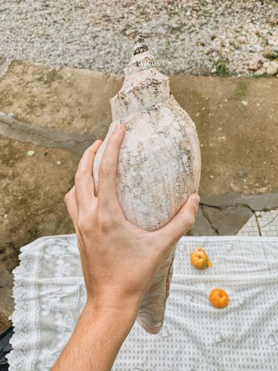 Cropped hand holding seashell outdoors
