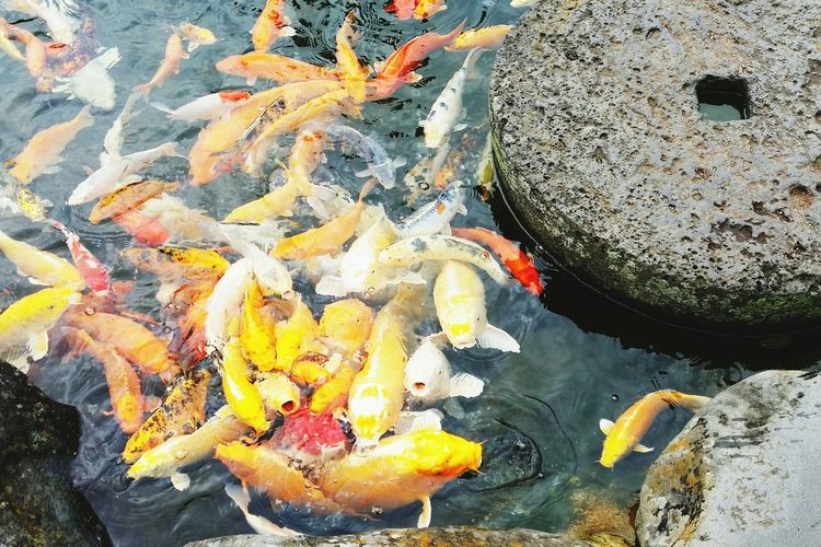 Relaxing Fishes Fish Feeding Fish Pond Check This Out