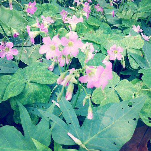 Flower 拈花惹草