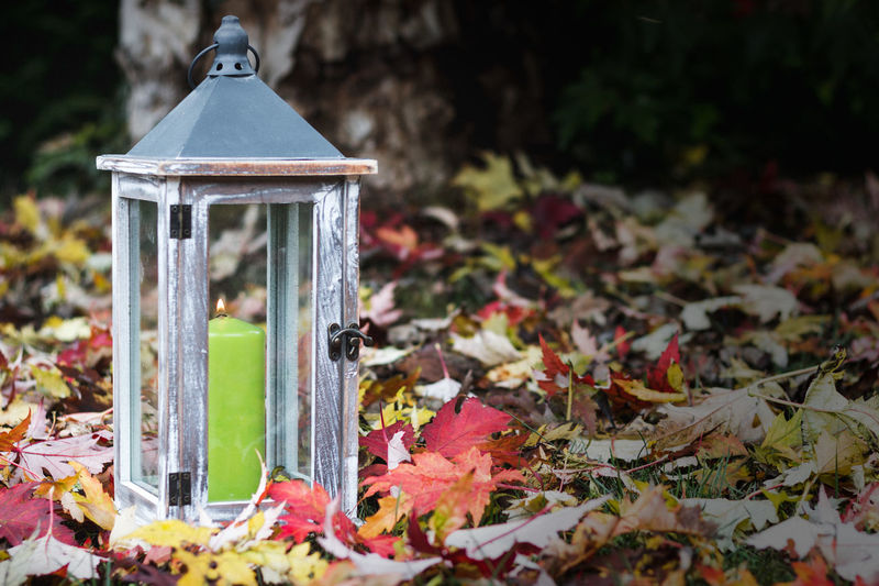 Close-up of lantern on autumn leaves