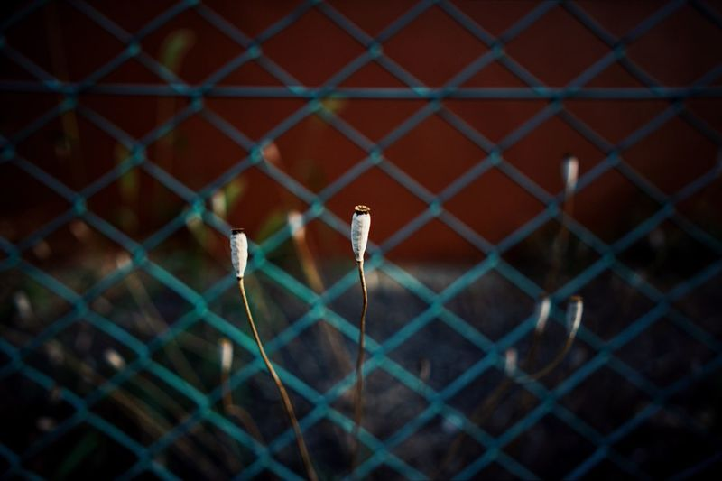 Close-up of plant against chainlink fence