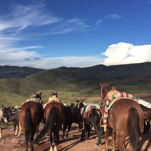 Horses Sky And Clouds Landscape San Luis Potosí Cerro Del Quemado