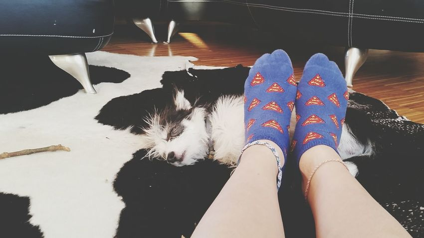 Foot warmer <3 Small Dogs  Cute Dog Chihuahua Cute Dogs My Dog Curled Up Asleep Sleeping Dog Matching Colors Superman