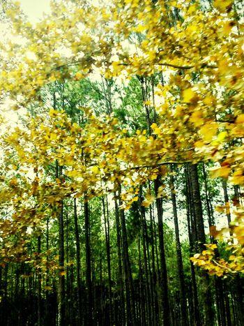 The Leaves Change Colors EyeEm Best Shots - Autumn / Fall