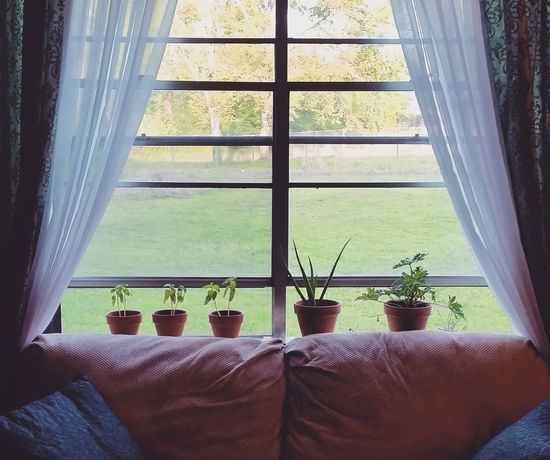 Hanging Out Taking Photos Check This Out That's Me Cheese! RelaxingHello World Hi! Enjoying Life Arkansas Plants Plants Collection Aloe Vera Window Window View Rain Rainy Day Apartment Apartment Buildings Apartment View Apartment Living Rental RENT