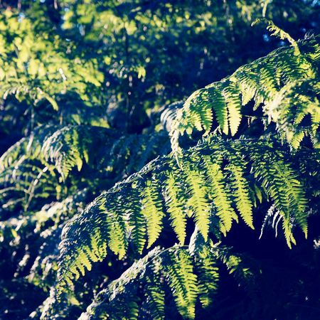 Forest leaves nature