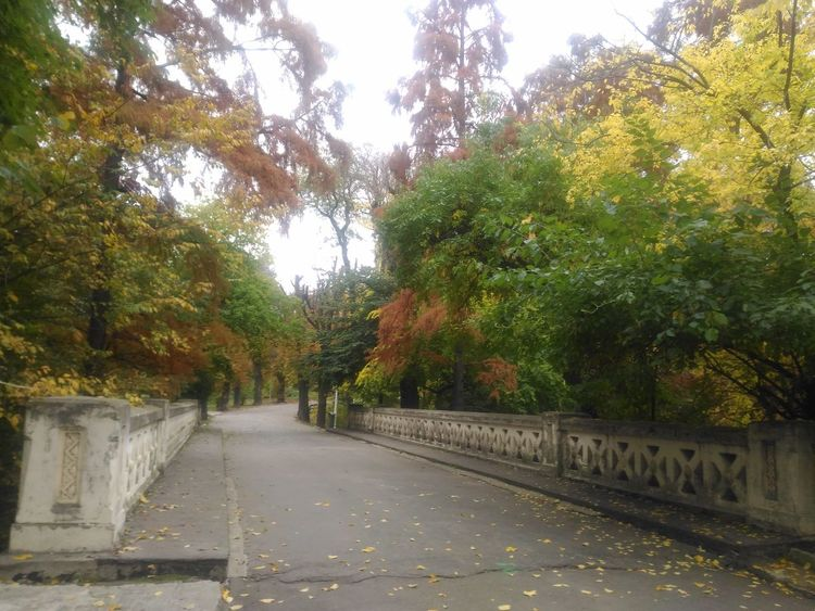 Beauty In Nature Bridge Carol Park Bucharest Carol Park Day Footpath Google Growth Nature Nature Nature Collection Nature Colors Nature Colours Nature Photography Nature_collection Naturelovers No People Outdoors Park Park - Man Made Space Romania Scenics The Way Forward Tranquility Tree