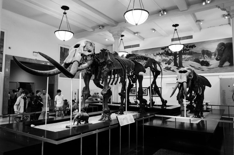 NYC Series - AMNH (instagram: @iamjosway) NYC Animal Wildlife Art And Craft Arts Culture And Entertainment Ceiling Creativity Hanging Human Representation Illuminated Indoors  Lighting Equipment Real People Representation Retail  Shopping Store The Photojournalist - 2018 EyeEm Awards The Great Outdoors - 2018 EyeEm Awards The Traveler - 2018 EyeEm Awards The Portraitist - 2018 EyeEm Awards The Architect - 2018 EyeEm Awards The Troublemakers
