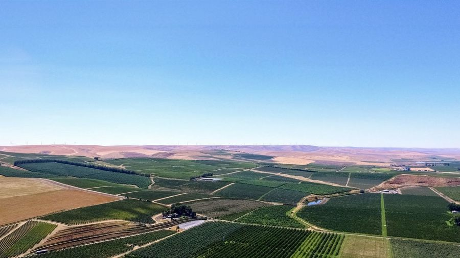 Agriculture Rural Scene Field Farm Crop  Aerial View No People Business Finance And Industry Beauty In Nature Outdoors Summer Nature Day Sky Summertime Summer Views Copy Space Backgrounds Darryn Doyle Check This OutMilton Freewater Oregon Drone View Eastern Oregon Dronephotography Landscape Breathing Space