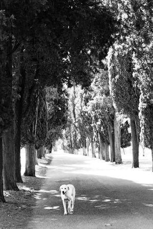 Day Dog Domestic Animals Mammal Nature Outdoors Pets Road The Way Forward Tree