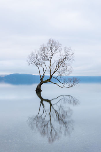 Bare tree in lake against sky