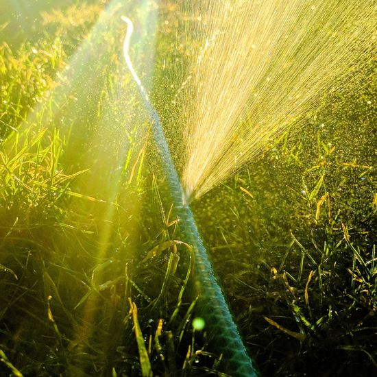 Sunlight Nature Beauty In Nature Growth Sunbeam Close-up Water Green Color Freshness Outdoors No People Day Full Frame Water Spray Hose Close Up