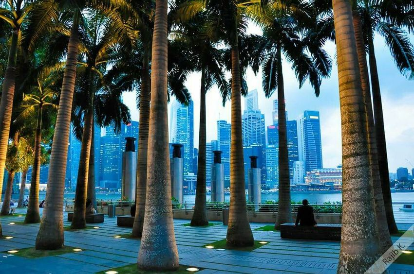 The V.E.R.T.I.C.A.L.S ... Singapore Skyline Vertical Skyscrapers Cityscape Marina Bay Palm Trees Green Blue Intermittents