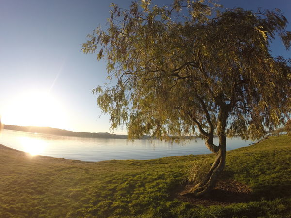 Beauty In Nature Grass Lake Taupo Landscape Sun Sunlight Tree Water