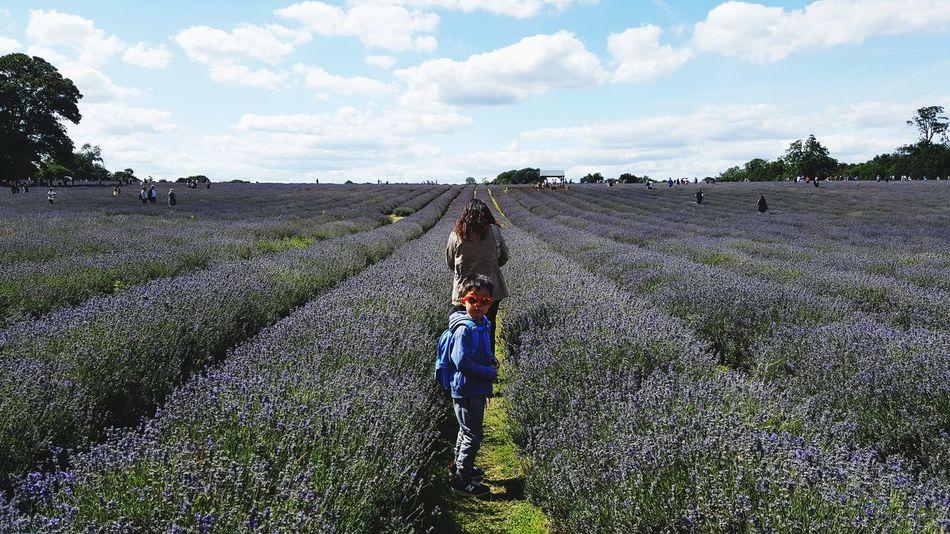 Lavender farm *