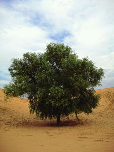 The only tree on the desert. Hanging Out Enjoying Life Taking Photos Escaping From The Heat