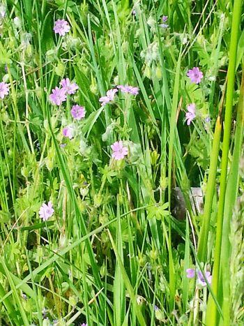 Summertime Tall Grass Flowers Field Of Flowers