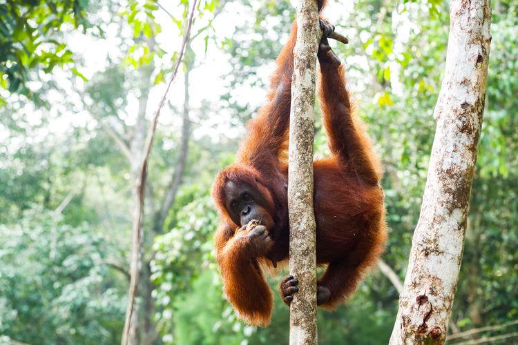Monkey hanging on tree