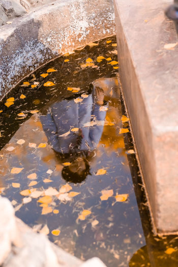 Reflection of leaves in puddle