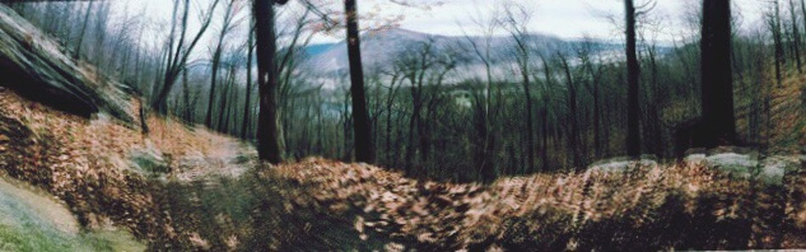 Forest Newyork Creepy Double Exposure Check This Out Winter Hiking Park Outdoors Healthy