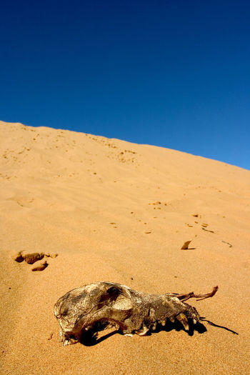 Arid Climate Beauty In Nature Blue Clear Sky Day Nature No People Outdoors Sand Sand Dune Sky Sunlight Sunny