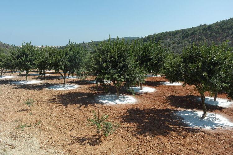 Beauty In Nature Chios Chios Greece Green Masticha Mastiha Outdoors Tranquil Scene Tree Trees Xios