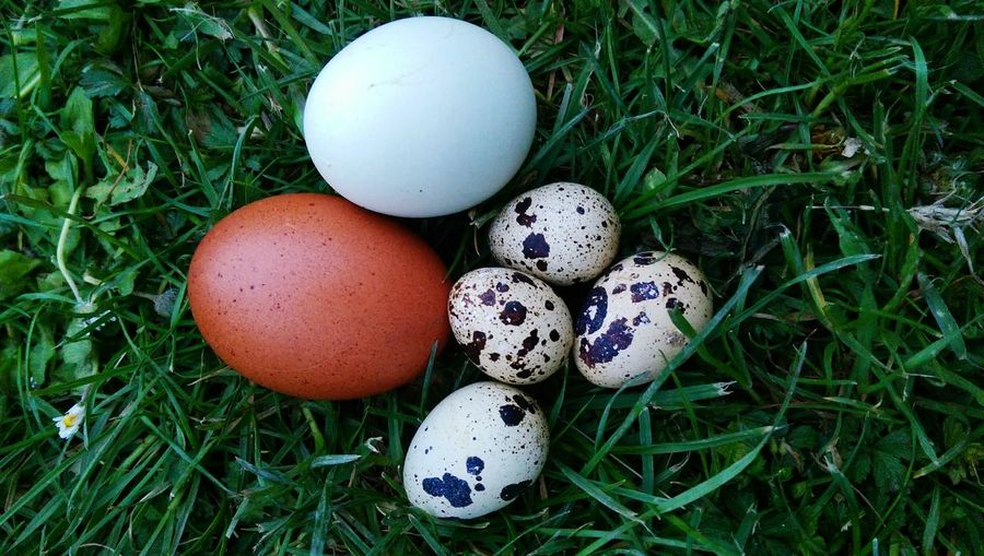 Close-Up View Of Free Range Eggs In Variety