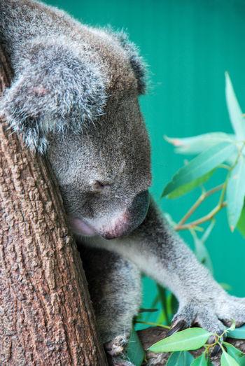 Close-up of an animal sleeping on tree trunk