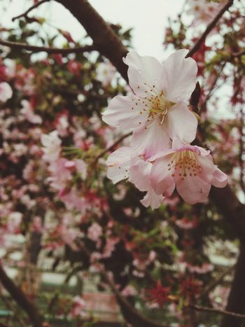 花,在這短暫的時間,綻放生命