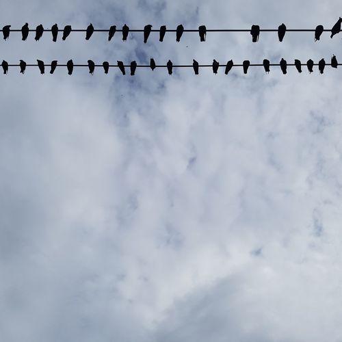 The Photojournalist - 2017 EyeEm Awards Outdoors Animal Themes Bird Day Cloud - Sky Birdlining Streetphotography Animal No People Togetherness Gatherings Citylifes The Street Photographer - 2017 EyeEm Awards The Great Outdoors - 2017 EyeEm Awards