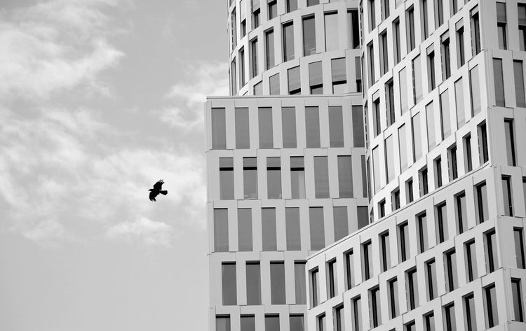 The Architect - 2017 EyeEm Awards Berlin Photography Upper West Berlin Architecture Outdoors Flying High Bird Photography Building Exterior Monochrome Schwarzweißfotografie Bnw Monochrome Photography Animal Photography Modern Architecture Noir Et Blanc Berlinstagram Upper West Bird Berliner Ansichten Traveling Destinations Pet Portraits Discover Berlin Lost In The Landscape Black And White Friday