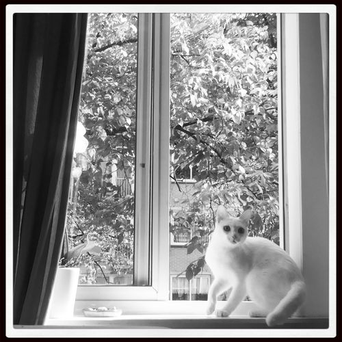 White Cat De Jordaan Lindengracht Window
