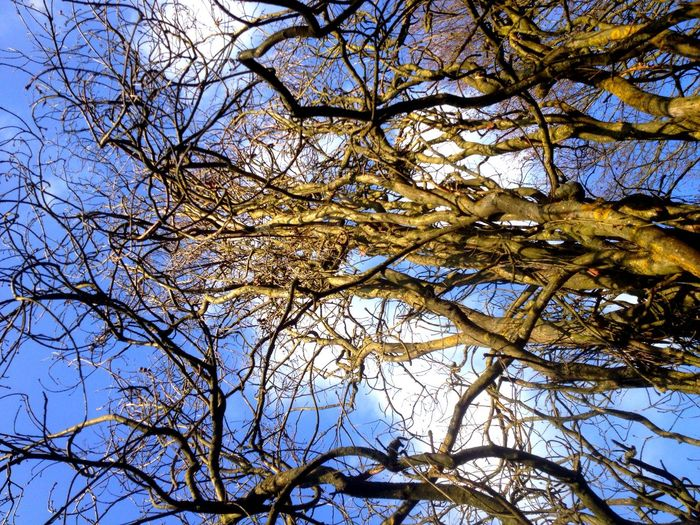 Trees Treetops Stunning Tree Spring