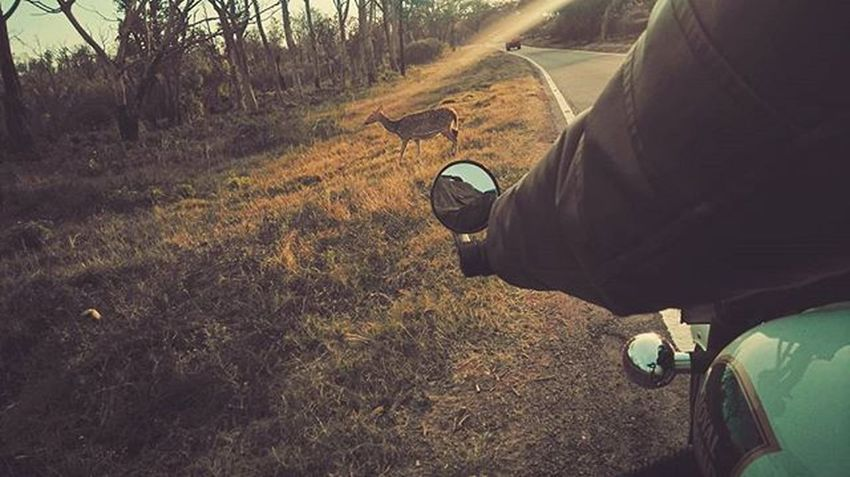 Ride through the jungle.. 😍 Ride RideOrDie Jungle Deer Royalenfield Peace Calm Freezing