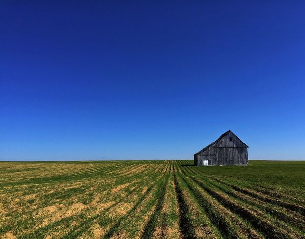 Early autumn barn in a middle of a field planted with winter cover crop. Barn Rural Scene Clear Sky Blue Field Cover Crop Rye Field No People Landscape Cereal Plant Built Structure Architecture Outdoors Agriculture Desolation Freedom New Brunswick, Canada