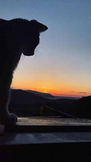 Made with iPhone 7 Cat Sunset One Animal Silhouette Animal Themes Nature No People Sky Pets Day Domestic Animals