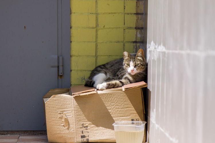 Box Domestic