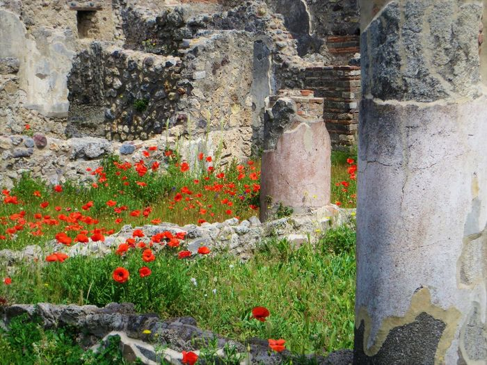 Ancient Civilization Architecture Beauty In Nature Building Exterior Built Structure Day Flower Flower Head Grass Growth History Nature No People Old Ruin Outdoors Plant Pompei Scavi Pompeii Details Pompeii Ruins Pompéi Stone Material Travel Destinations Weathered