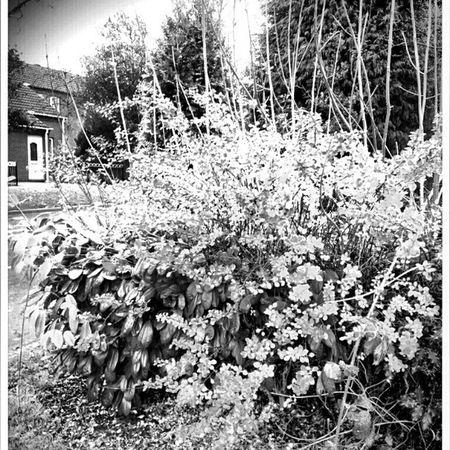 BWWinter Winter Landscapelovers Travelingram instagram DecemberWinter