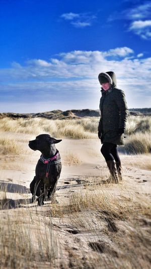 Windswept Cane Corso Canecorso  Wind Beach Photography Ainsdale Beachphotography Beach Windy