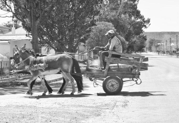 DonkeyCart Countryside Karoospaces Middaysun Weeklycarselfie Rubber Wheel