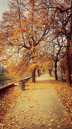 Autumn Colors Beautiful Nature Sarajevo