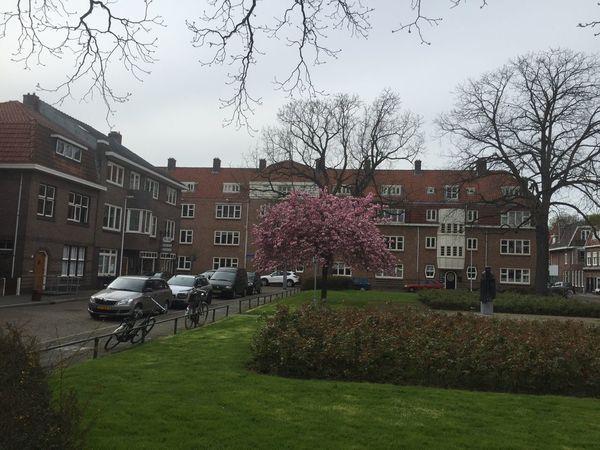 Appololaan in Utrecht