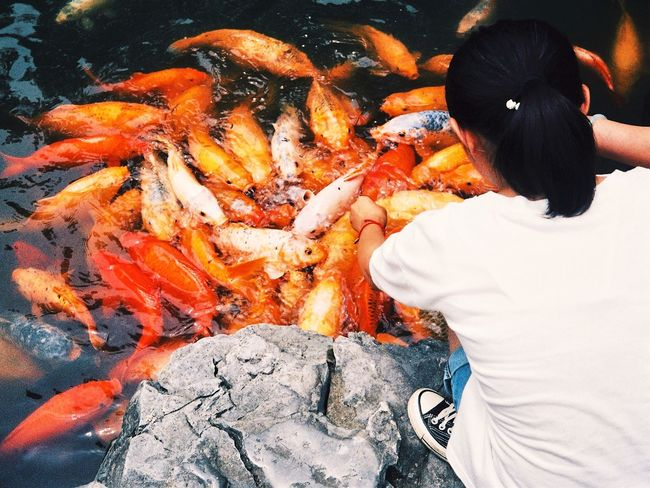 Summer Real People Fish Orange Color One Person High Angle View Rear View Large Group Of Animals Lifestyles Water Nature Close-up People