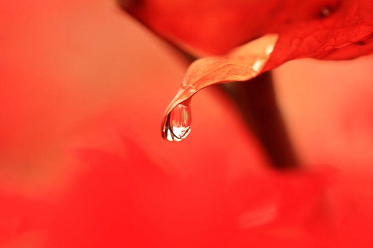 紅葉 Flower