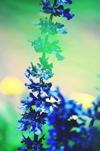 Perspectives On Nature Flower Purple Nature Plant Beauty In Nature Green Color Beauty Leaf Growth No People Close-up Multi Colored Fragility Outdoors Branch Day Flower Head Freshness Sky