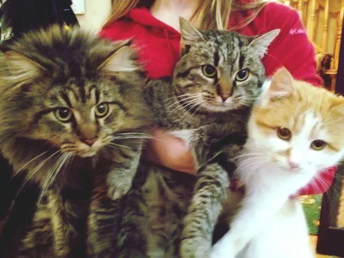 Cats Cat♡ Cats 🐱 Catsofinstagram Cats Of EyeEm Cats Lovers  Catsmania MyLove❤ Love ♥ Nice Atmosphere Kitty My Pezdyki Haha